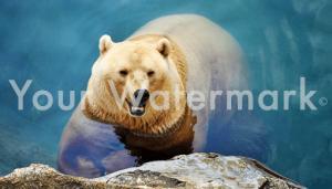 watermark_image-theft